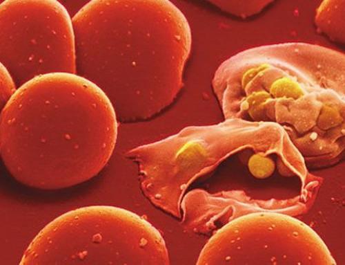 Malaria: il sangue raccolto in Italia è sicuro