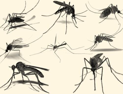 West Nile e altri virus 2020: aggiornamento in tempo reale
